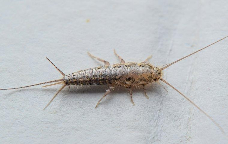 silverfish on a paperback book