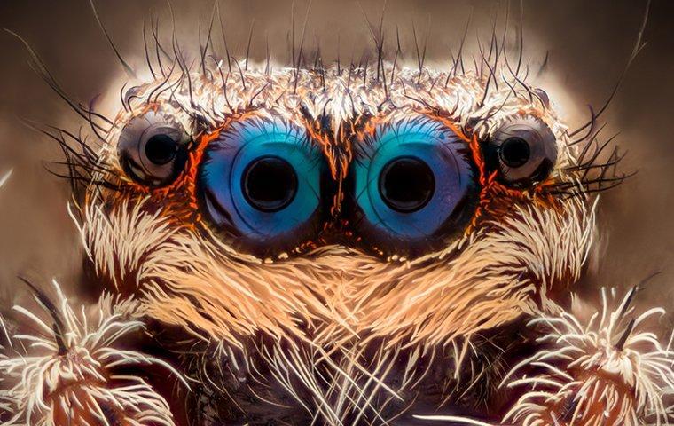 jumping spider in lewisville