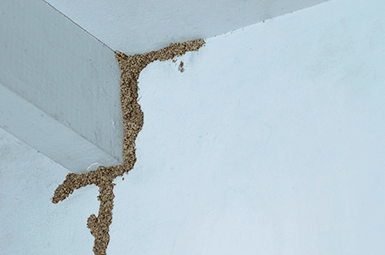 home with termite mud tubes