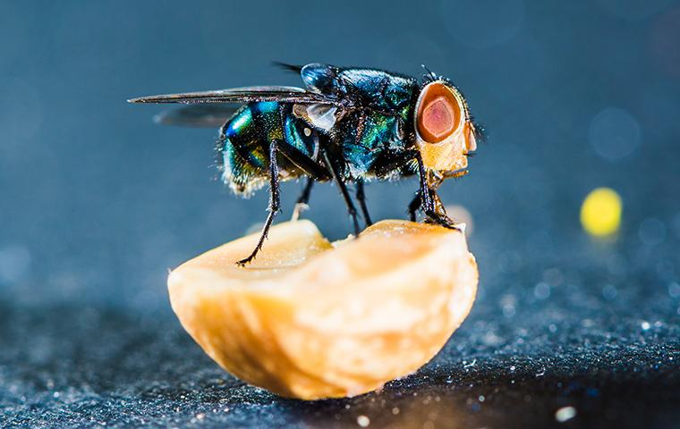a blow fly sitting on top of a pealed orange