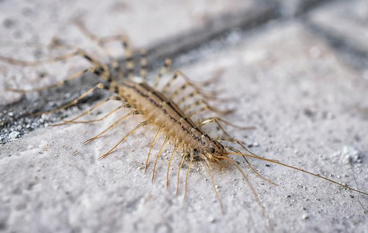 a house centipede on the tile floor in kitchen