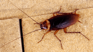 cockroach crawling on building materials