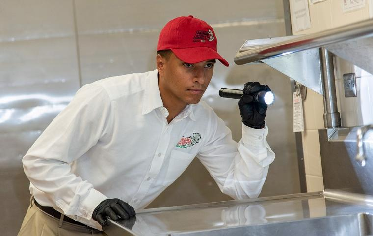 pest control technician inspecting a commercial kitchen counter