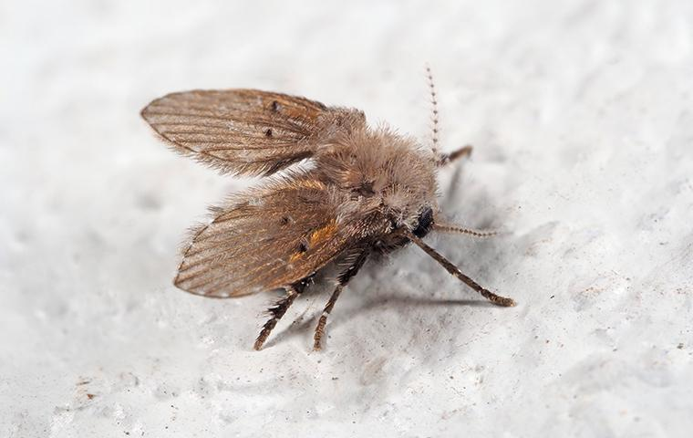 a drain fly on shower wall in bathroom