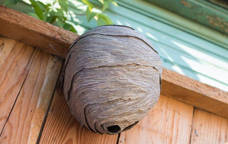 a large hornets nest