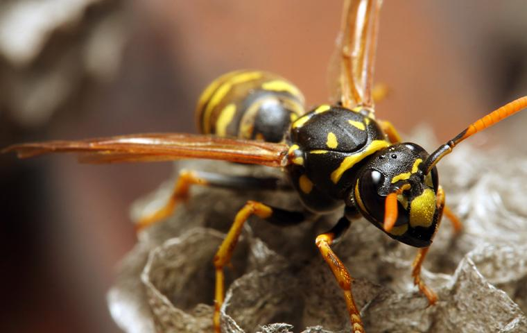 wasp sitting on a rock
