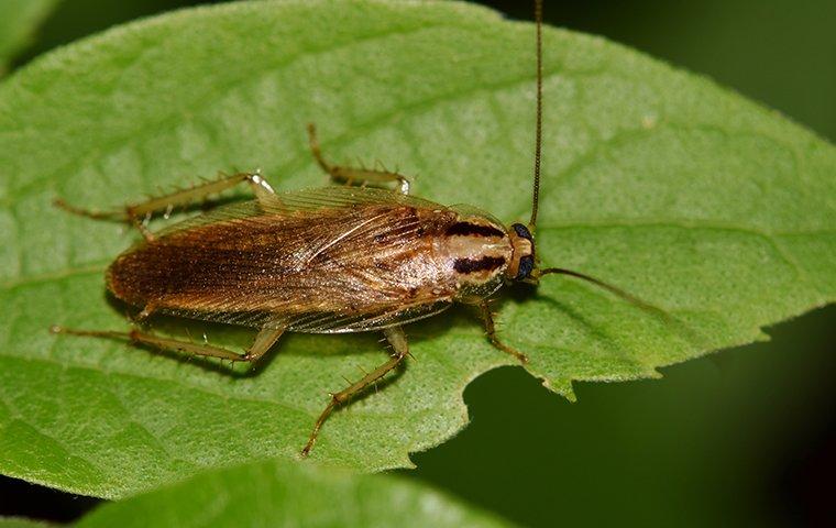 cockroach on a leaf in backyard