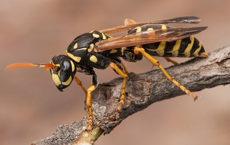 a wasp perched on a branch of a tree