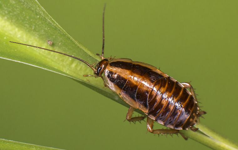 a cockroach clinging to the stem of a leaf