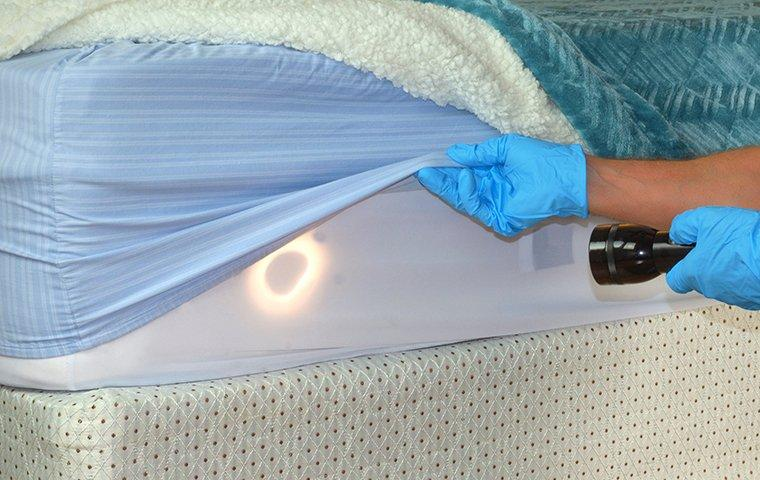 pest control technician inspecting mattress for bed bug sign