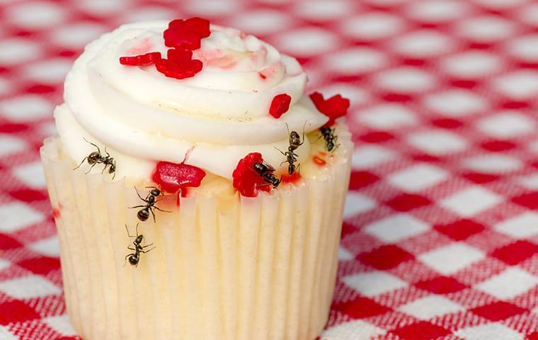 ant on cupcake