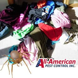 all americans tips to avoid spider bites