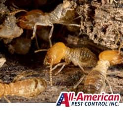 termites in a nashville yard