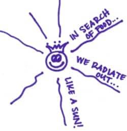 Radiateout
