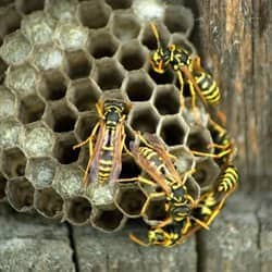 close up of wasp nest