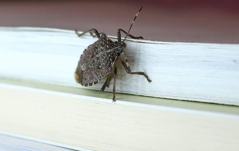 stink bug on a wall in brentwood