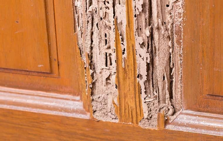 termite damage in a tennessee home