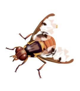 fruit flies in nashville tn