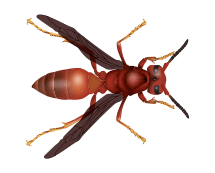 red paper wasp illustration