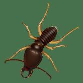 termite found in nashville tn