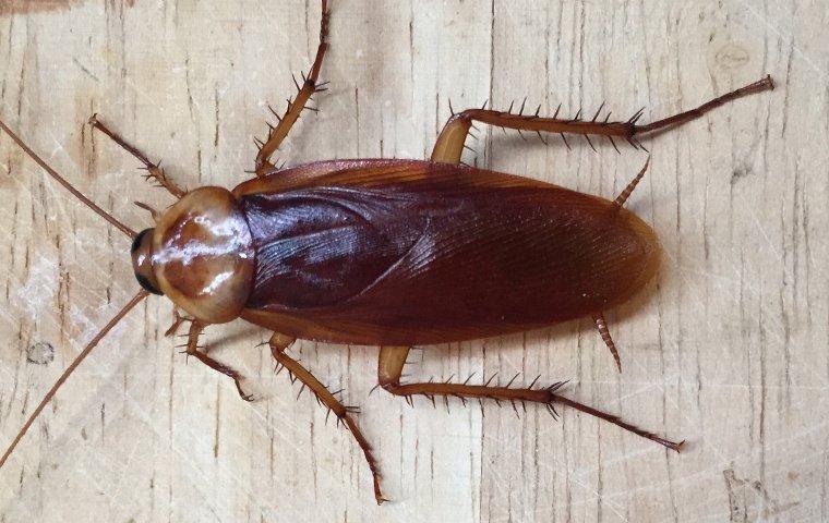 cockroach on cutting board