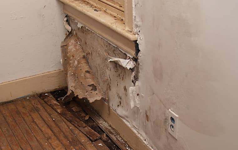 a moisture damaged wall in outer banks north carolina