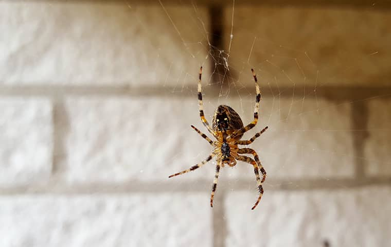 a house spider hanging from a web in virginia beach
