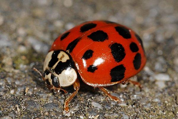 lady bug on driveway