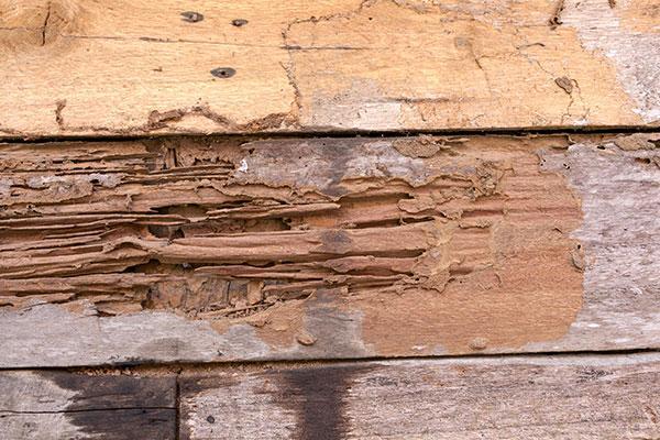 damaged wood in portsmouth ohio