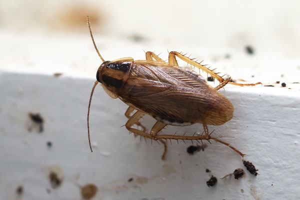 close up of a cockroach in portsmouth ohio