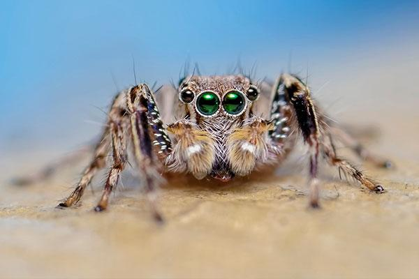 a jumping spider in portsmouth ohio