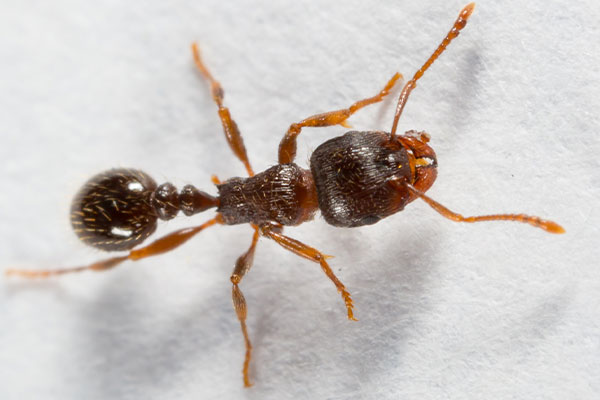 a pavement ant in portsmouth ohio