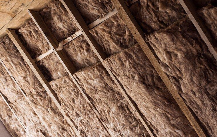 view of insulation inside an attic