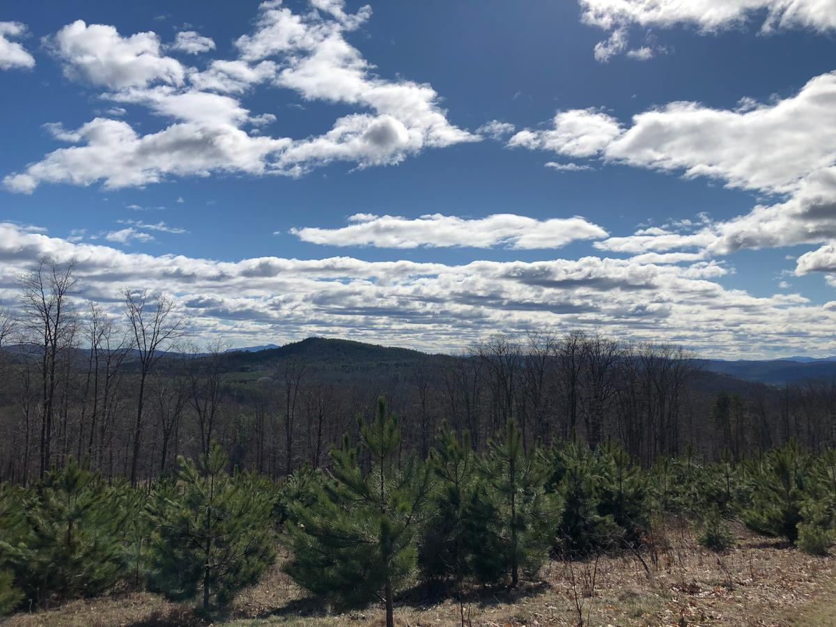 A view from Prospect Hill on the Trescott Trails looks out over a sharp blue sky dotted with clouds.