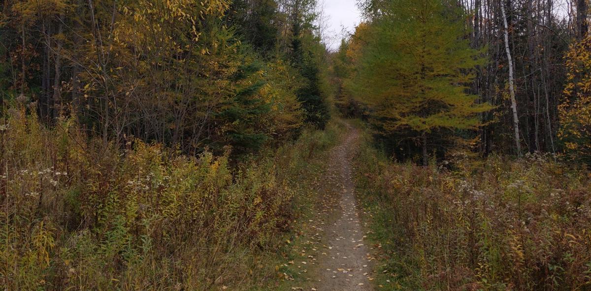 Burke Mountain Hiking Trail in the fall