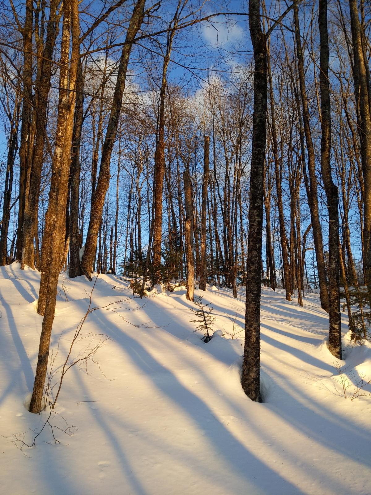 Sunlight on the snowy ground is one of the joys of the winter woods.