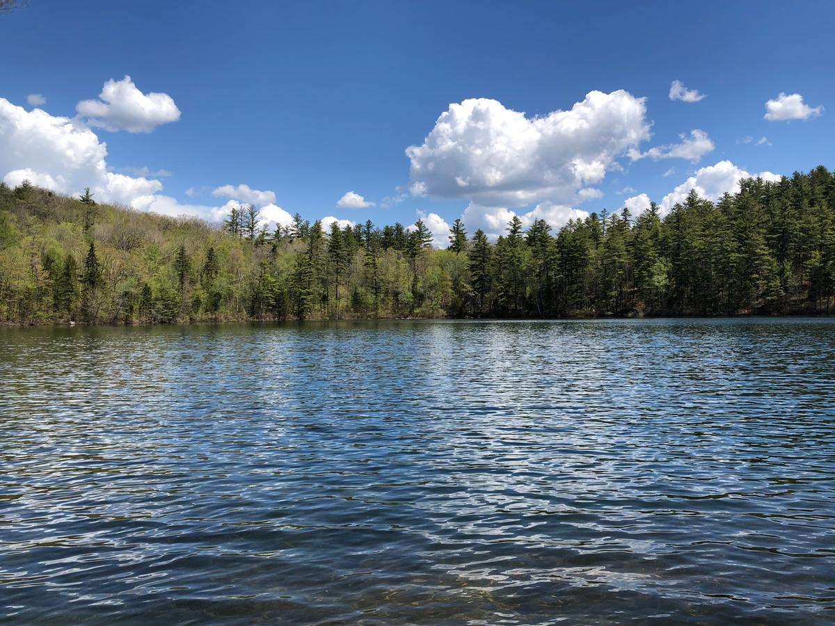 A view of Cole Pond, lined by pine trees, with a blue sky overhead.