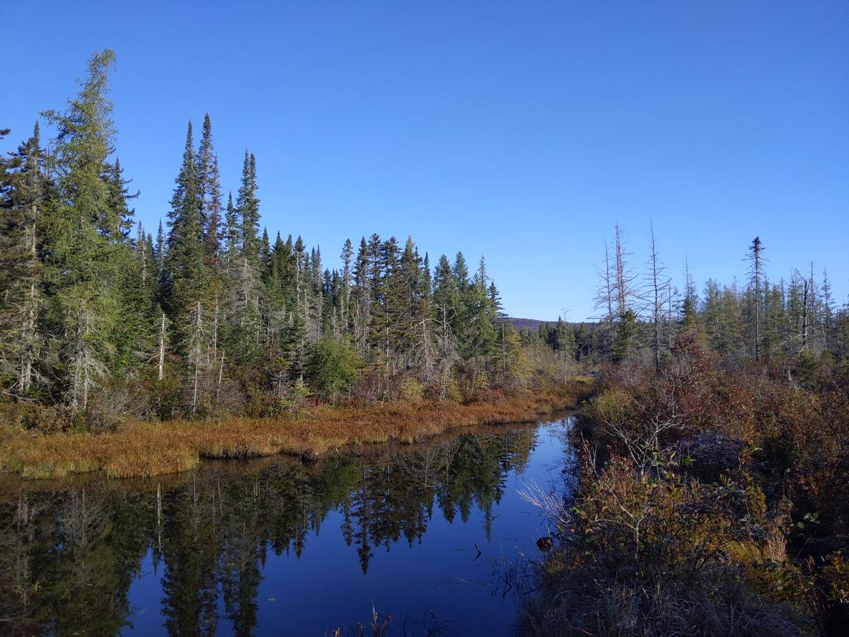 Spruce trees reflect on a pond