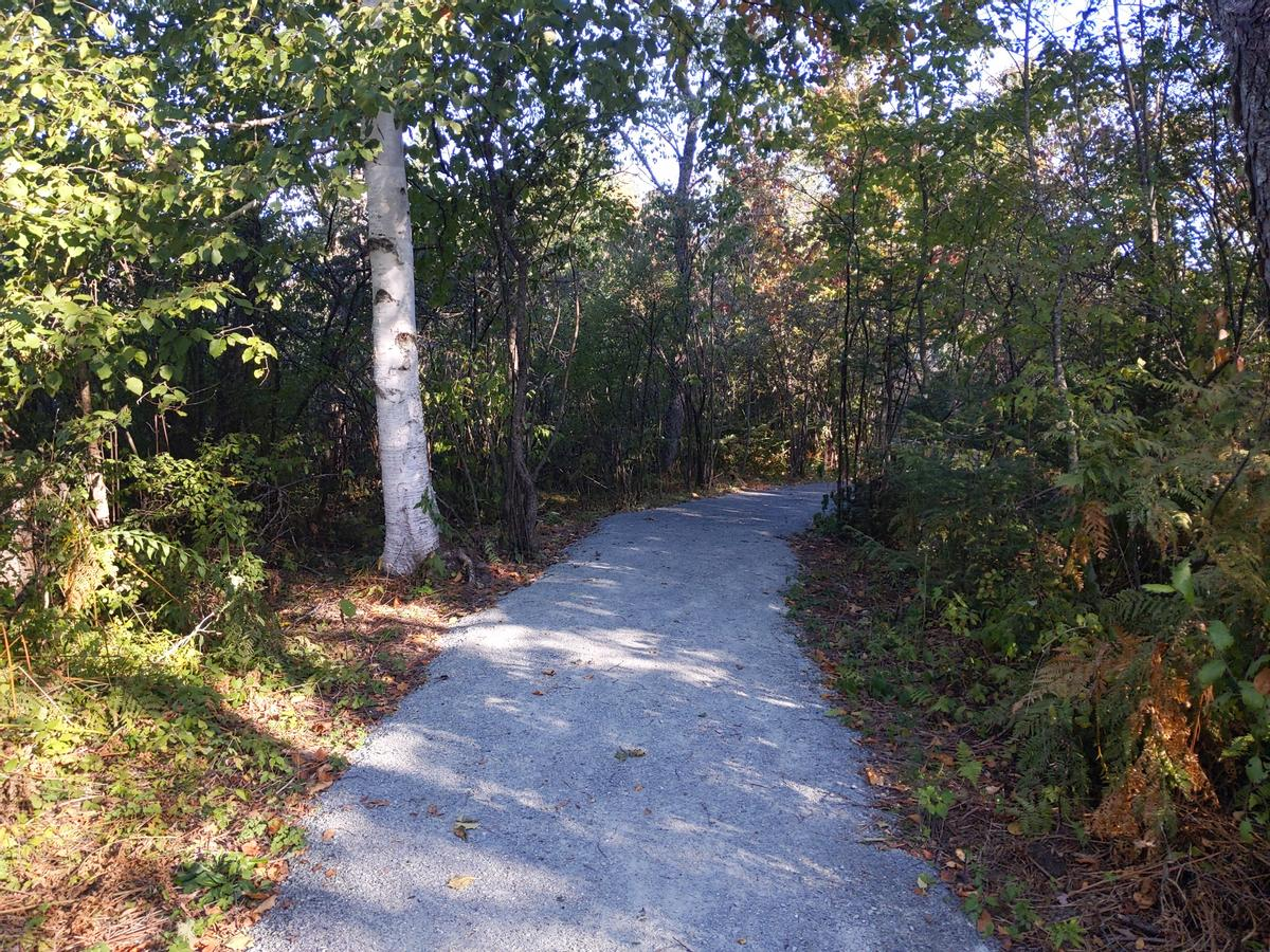 A compacted gravel trail enters the forest next to a birch tress