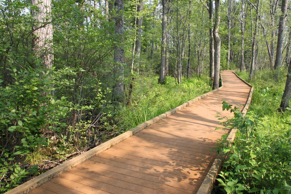 A boardwalk goes through a green forest