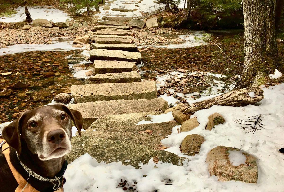 Unfortunately Spring snow melt can reveal not just the trail, but also the waste that dog owners neglected to pick up during the winter months.