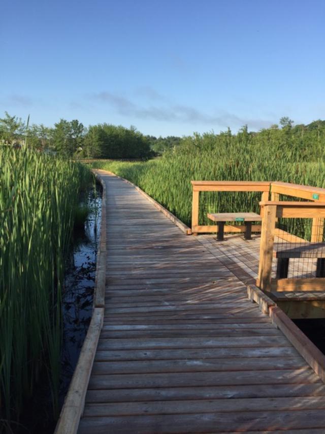 An accessible boardwalk travels through a marsh