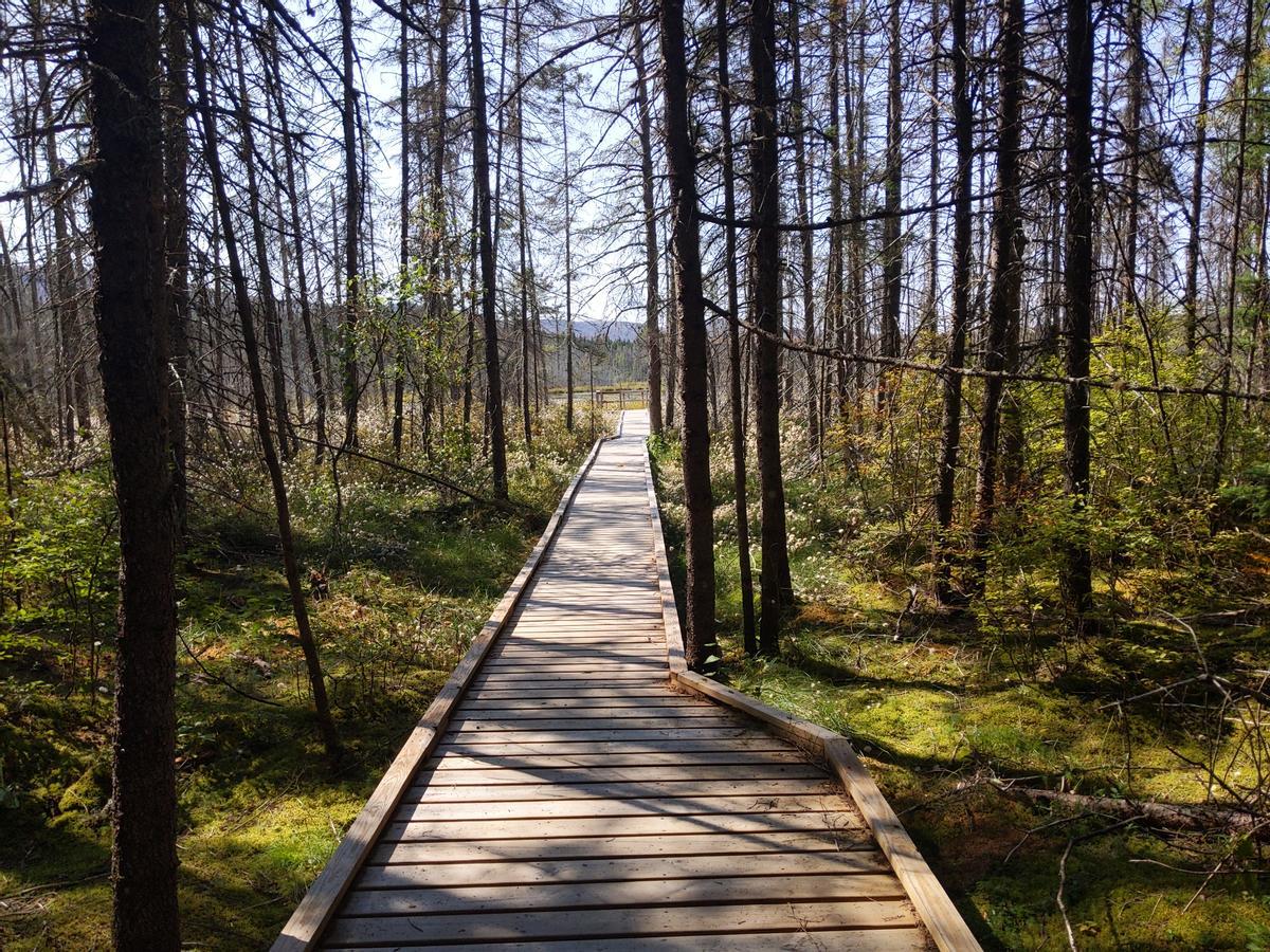 Boardwalk into Moose Bog.