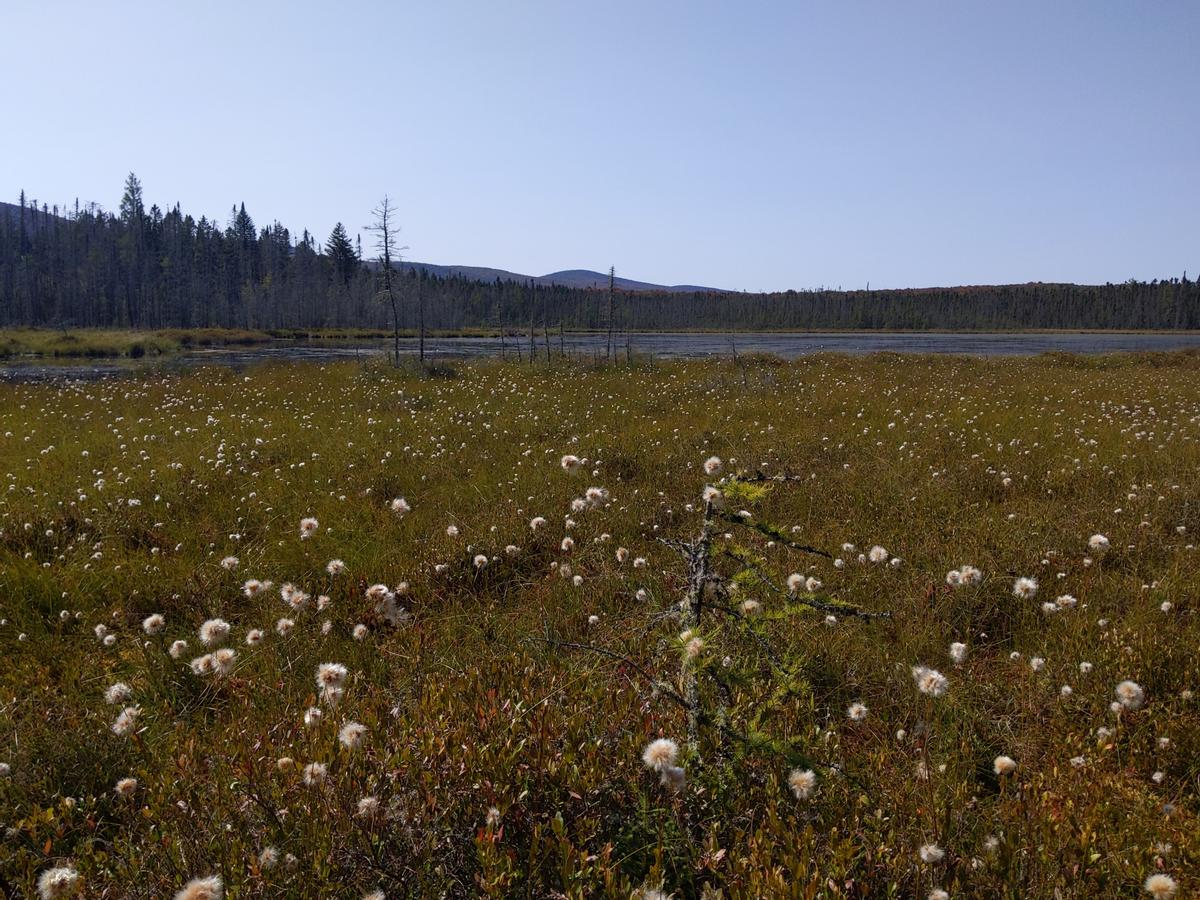 View over Moose Bog.