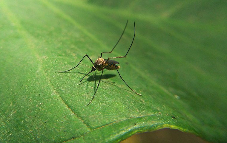 a mosquito crawling on a plant outside of a home