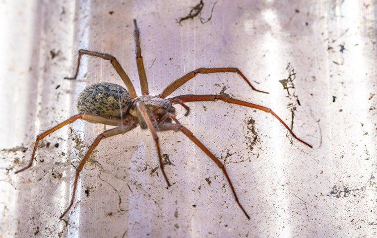 a large spider crawling on a dirty window inside of a home