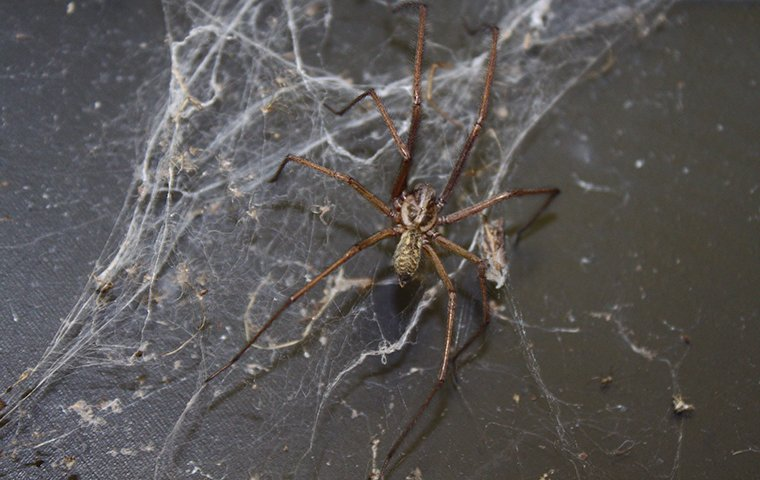 a spider crawling on a web inside of a home
