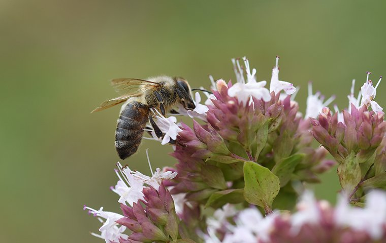 a bee eating the nectar of a flower outside of a home