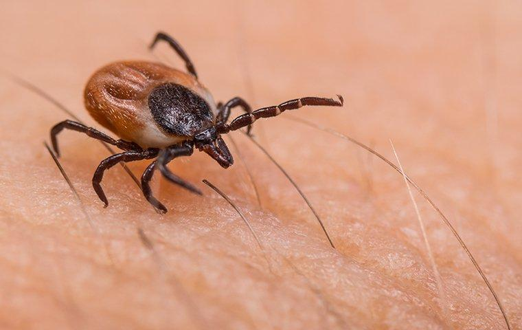 a tick crawling on human skin outside of a home