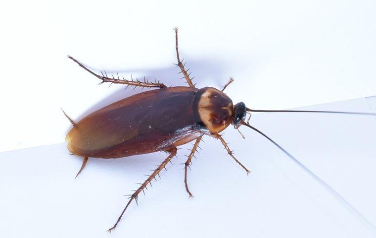 cockroach on white floor